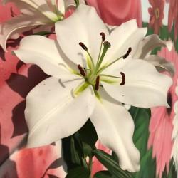 Oriental Blanco, 3-4 Flores